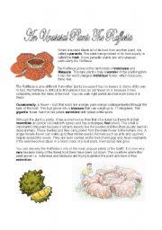 English Worksheets: Rafflesia