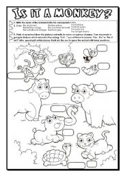English Worksheets: Is it a monkey?
