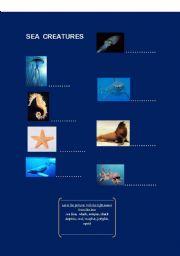 English Worksheets: Sea creatures