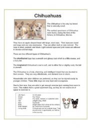 English Worksheets: Chihuahua Dogs - Reading and Comprehension WS x2 - Adjectives...