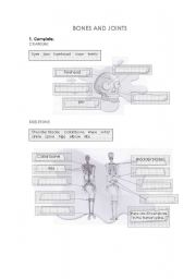 English Worksheet: Bones and joints