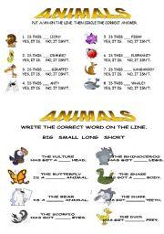 English Worksheets: animals basic