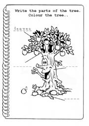 English Worksheet: parts of a tree 2