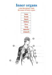 English Worksheet: Inner organs-  the names of body organs