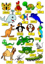 English Worksheets: Animal Pictionary (2/2)