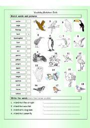English Worksheets: Vocabulary Matching Worksheet - BIRDS