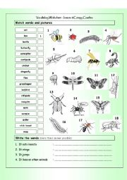 English Worksheet: Vocabulary Matching Worksheet - INSECTS & Creepy Crawlies