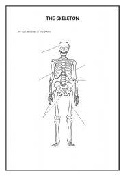 English Worksheet: The skeleton