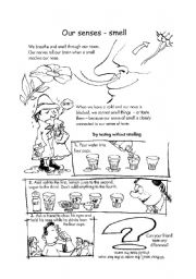 English Worksheets: our senses - smell