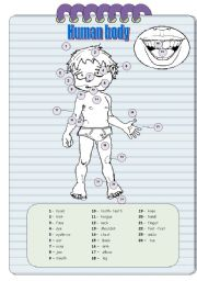 English Worksheets: Homan Body