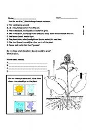English worksheet: Photosynthesis