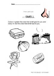 English Worksheets: The smell sense