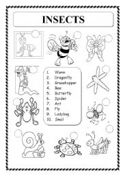 English Worksheet: ANIMALS: INSECTS