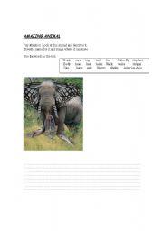 English Worksheets: AMAZING ANIMAL