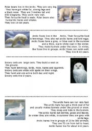 English Worksheets: Animals of the Arctic