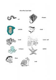 English Worksheets: Life in Coral Reefs