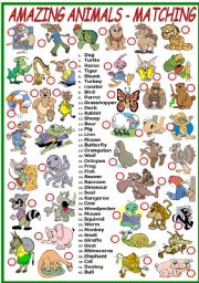 English Worksheet: AMAZING ANIMALS- MATCHING EXERCISE (B&W VERSION INCLUDED)