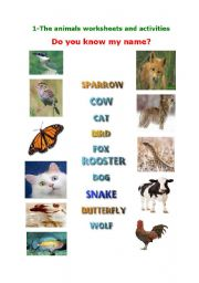 English Worksheets: Animal Worksheet