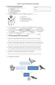 English Worksheet: Food chain & Ecosystem