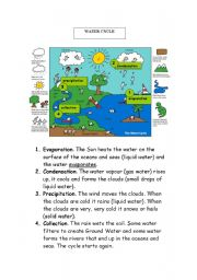 English Worksheet: The Earth Water cycle