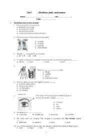 English Worksheets: skeleton, joint, senses