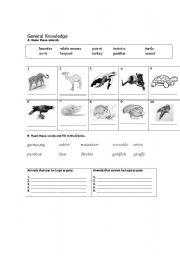 English Worksheets: General Knowledge - Animal
