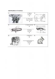 English Worksheets: Match the animals