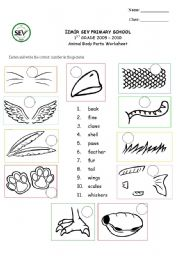English Worksheets: Animal body parts