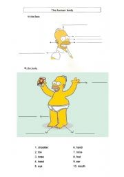 English Worksheet: The human body with Homer Simpson