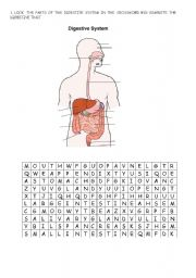 English Worksheet: DIGESTIVE SYSTEM