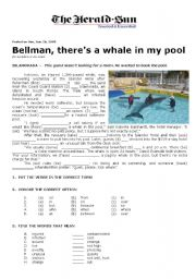 English Worksheet: A Whale in My Pool
