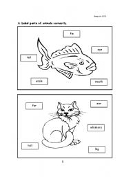 English Worksheets: Parts of Animal