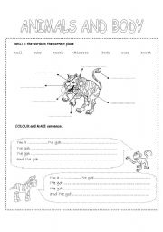 English Worksheets: animals and body
