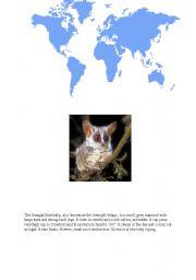 English Worksheets: Bushbabies