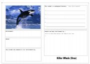 endangered animal factfind worksheets. Black Bedroom Furniture Sets. Home Design Ideas