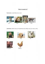 English Worksheets: What do animals eat ?