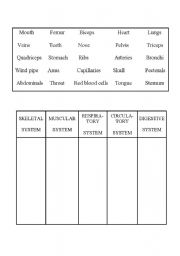 English worksheets: Systems of the human body