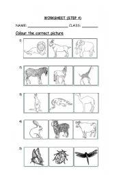 English Worksheets: animal�s worksheet
