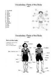 English Worksheets: Vocabulary: parts of the body