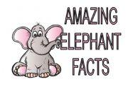 English Worksheets: Amazing Elephants Facts