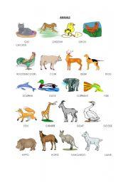 English Worksheets: animals(pictionary)