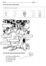 English Worksheet: PLANTS & TREE PARTS ACTIVITY
