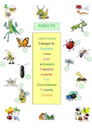 English Worksheets: ANIMALS - INSECTS