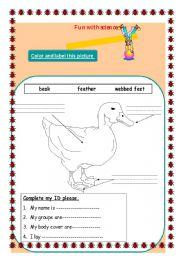 English Worksheets: Animals Hbitats