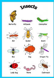 Vocabulary worksheets > The animals > Insects > Insects