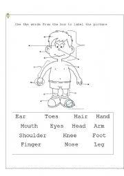 English Worksheets: Body parts III