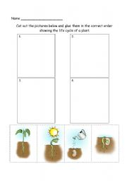 English Worksheet: plant lifecycle assessment