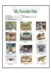 English Worksheets: Pets - Elementary vocabulary and grammar