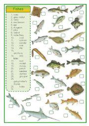 English Worksheets: Fishes - matching exercise