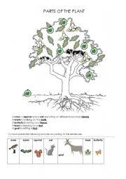 plants worksheets for kindergarten pdf parts of a plant worksheet for 2nd grade english. Black Bedroom Furniture Sets. Home Design Ideas